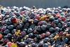 Gutsschänke Weinlaube