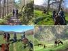 Agriturismo Scuderia Castello - Freizeit